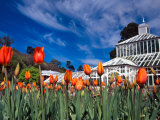 Winter Garden, Botanic Gardens, Dunedin, New Zealand Photographic Print by David Wall