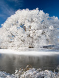 Hoar Frost on Willow Tree, near Omakau, Central Otago, South Island, New Zealand Photographic Print by David Wall