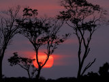 Amazonia Sunset Fotografie-Druck von Art Wolfe