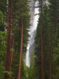 Upper and Lower Yosemite Falls. Yosemite National Park, CA Photographic Print by Jamie & Judy Wild
