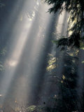 Sun Rays Through Mist, Olympic National Park, Washington, USA Photographic Print by Art Wolfe