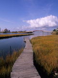 Fogers Island Walkway, Ocean City, Maryland, USA Photographic Print by Bill Bachmann