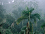 Fog in Cloud Forest, Wilson Botanical Gardens, Costa Rica Photographic Print by Cindy Miller Hopkins