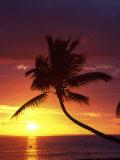 Sunset and Palm Trees, Coral Coast, Viti Levu, Fiji Photographic Print by David Wall