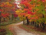 Vermont Country Road in Fall, USA Photographic Print by Charles Sleicher
