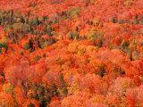 Fall Colors, Northwoods, Minnesota, USA Fotografie-Druck von Art Wolfe