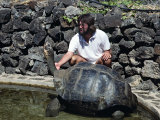 Captive Giant Tortoise Getting its Neck Rubbed, Galapagos Islands, Ecuador Photographic Print by Charles Sleicher