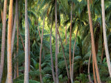 Coconut Palms, Bora Bora, French Polynesia Photographic Print by Art Wolfe