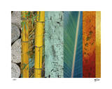 Rainforest Zen II Limited Edition by M.J. Lew