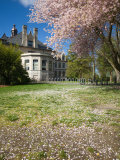 Denny Hall with Blooming Cherry Trees, University of Washington, Seattle, Washington, USA Photographic Print by Jamie &amp; Judy Wild