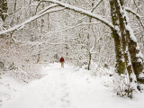 Trail and Hiker in Winter, Tiger Mountain State Forest, Washington, USA Photographic Print by Jamie & Judy Wild