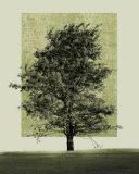 Natures Shapes II Poster par Harold Silverman