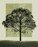 Natures Shapes I Plakater af Harold Silverman