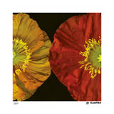 Red & Yellow Poppy II Giclee Print by Pip Bloomfield