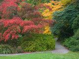 Pathway with Autumn Color, Washington Park Arboretum, Seattle, Washington, USA Photographic Print by Jamie & Judy Wild