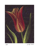 Tulip Limited Edition by  Jm Designs