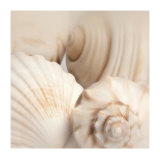 Shells II Print by Jan Lens