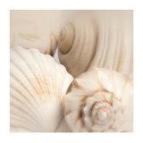 Shells II Posters by Jan Lens