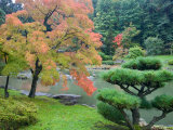 Autumn Color at the Japanese Garden, Washington Park Arboretum, Seattle, Washington, USA Photographic Print by Jamie & Judy Wild