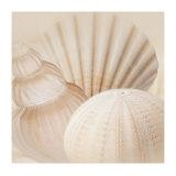 Shells III Prints by Jan Lens