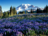 Mt. Rainier from Mazama Ridge, Mount Rainier National Park, Washington, USA Photographic Print by Jamie & Judy Wild