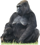 Gorilla Mom &amp; Child Stand Up