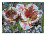 Springtime Tulips Photomosaic Photographic Print by Michelle Calkins