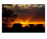 Sunset In The Serengeti Photographic Print by M. Dang