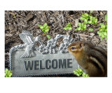 Welcome Chipmunk Photographic Print by Shelley Jones