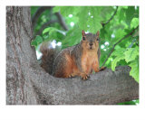 Curious Squirrel Photographic Print by Kelly Briones