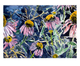 Echninacea Cone Flowers Photographic Print by Derek Mccrea