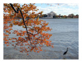 Fall Foliage Around Thomas Jefferson Memorial No-8 Photographic Print by William Luo