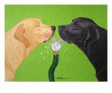 Labs Like To Share - 2 Giclee Print by Amy Reges