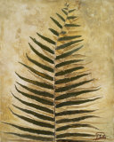 Ferns III Prints by Patricia Quintero-Pinto