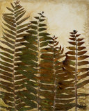 Ferns I Prints by Patricia Quintero-Pinto