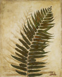 Ferns II Art by Patricia Quintero-Pinto