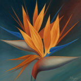 Bird of Paradise II Posters by Vivien Rhyan