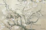 Branches d'amandier en fleurs, Saint-Rémy, vers1890 - tonalité brun beige Affiches par Vincent van Gogh