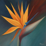 Bird of Paradise I Poster by Vivien Rhyan