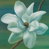 Star Magnolia Prints by Vivien Rhyan