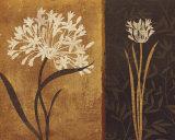 Yin Yang II Prints by Lisa Audit