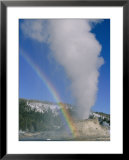 A rainbow forms during an eruption of Castle Geyser Poster by Norbert Rosing