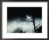 Dead tree silhouetted against a full moon Prints by Michael S. Quinton