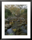 A small, wild creek flows over the stones Prints by Rich Reid