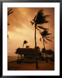 A storm ravages the palm trees and huts on Glovers Reef Posters by Bill Hatcher