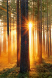 Forest Sunbeams Kunstdrucke