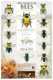 The World Of Bees Prints