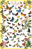 Butterflies Prints