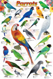 Parrots Prints