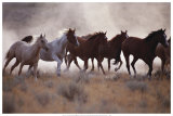 Grassland Herd Print by David R. Stoecklein